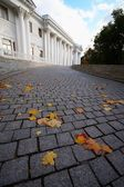 Pavement with leaves — Stock Photo