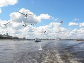 The Volga landscape with seagulls — Stock Photo
