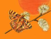 Butterfly — Stok fotoğraf
