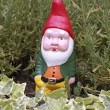 Garden Gnome — Stock Photo #3670742