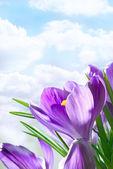 Flores de primavera hermosa — Foto de Stock
