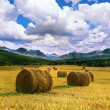 Stock Photo: Golden hay bales