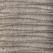 Palm bark texture. - Stock Photo