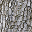 Texture of tree cortex. — Stock Photo