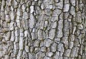 Texture of tree cortex. — Stock Photo