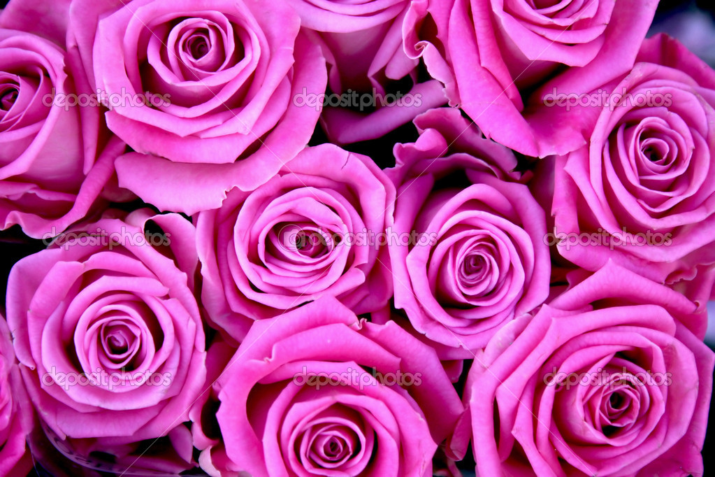 Background with pink roses — Stock Photo #2801754