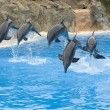 Leaping Bottlenose Dolphins — Stock Photo