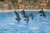 Dolphin Display — Stock Photo