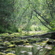 The river in wood — Stock Photo
