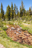 High sierra creek — Stock Photo