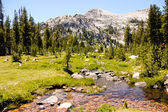 High sierra meadow in Yosemite national park — Stock Photo