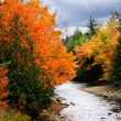 Fall Colors — Stock Photo #3892381