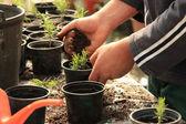 Plantando uma árvore — Foto Stock
