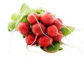Fresh radishes — Stock Photo