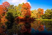 Fall in full blossom — Stock Photo