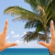 Hands Framing Palm Tropical Trees — Stock Photo