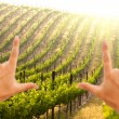 Royalty-Free Stock Photo: Hands Frame Beautiful Grape Vineyard