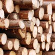 Royalty-Free Stock Photo: Pile of logs