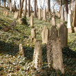 Stock Photo: Jewish cemetery in Trebic