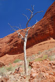 Tree with red rocks in Australia — Stock Photo