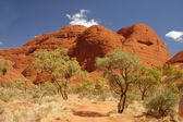 Trees with red rocks in Australia — Stock Photo