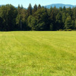 Stock Photo: Panoramic Field