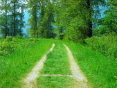 Old Road — Stock Photo