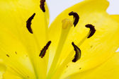 Flower abstract — Stock Photo