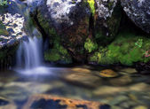 Flowing water in forest — Stock Photo