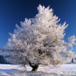 Stock Photo: Big frozen tree in sunshine