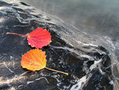 Colorful leaves isolated on stone — Stock Photo