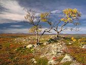 Colorful autumn landscape — Stock Photo