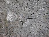 Textura de madeira cortada closeup — Fotografia Stock