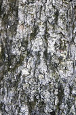 Tree bark texture background — Stock Photo