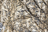 Texture of nature stone background closeup — Stock Photo