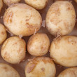 Постер, плакат: New Potatoes
