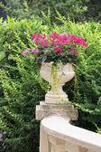 Flower Planter — Stock Photo