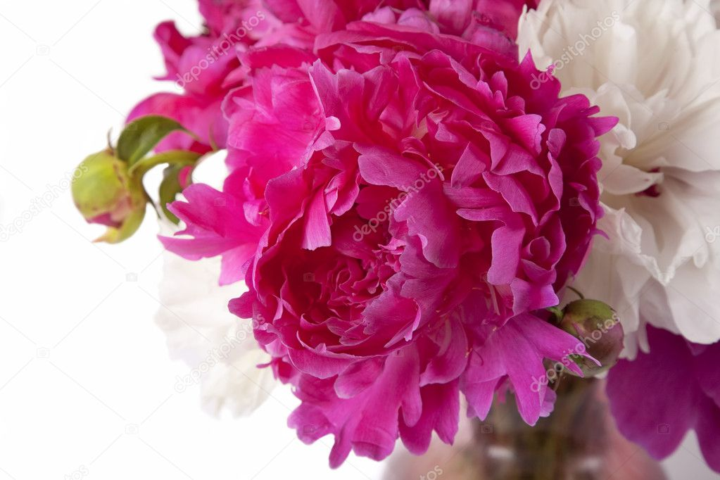 A bouquet of peonies in a glass vase. — Stock Photo #3591657