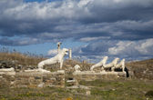 Terrace of the Marble Lions of Delos — Stock Photo