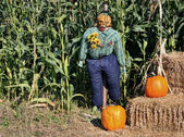 Corn Field Scarecrow — Stock Photo