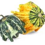 Decorative Gourds — Stock Photo