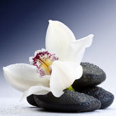 Stones and orchid — Stock Photo