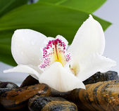 Orchid and stone — Stock Photo