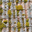 Old tiles roof - Foto Stock