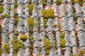Old tiles roof — Stock Photo