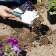 Planting a flower garden - Stock Photo