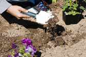 Planting a flower garden — Stock Photo