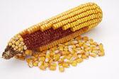Espiga de milho 3 — Foto Stock