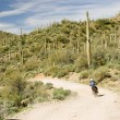 Stock Photo: Desert rider