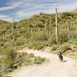 Desert rider — Stock Photo